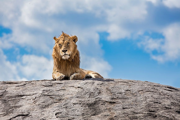 New Images > A safari in Tanzania A photographic adventure through the Serengeti National Park through the lens of photographer Jeremy Flint
