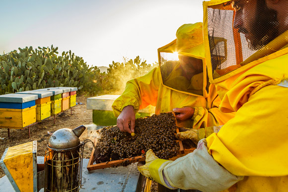 Solomango Travel Feature: Etna's Honey by Alessandro Saffo